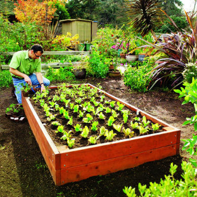 raised-bed-main-l[1]
